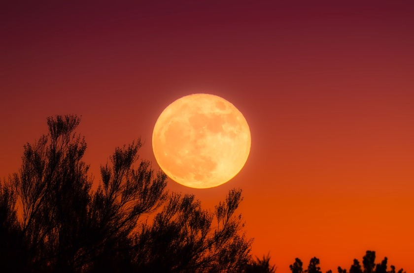 harvest-moon-1828012_960_720